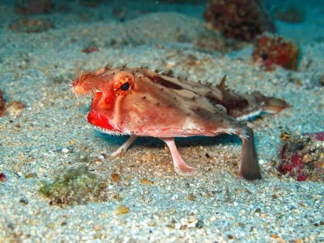 Hewan-Hewan Laut yang Unik Di Dunia Hewan-Hewan Laut yang Unik Di Dunia 001