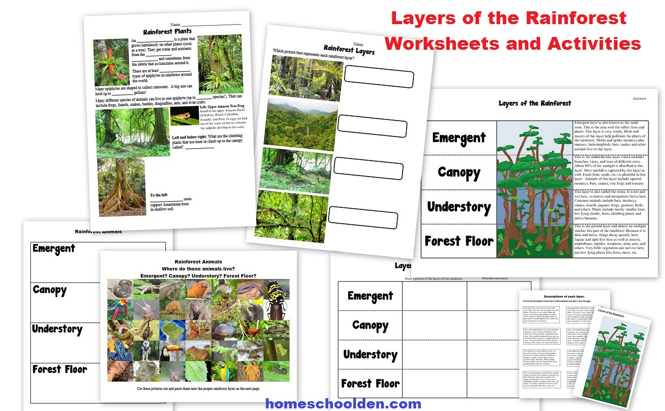 This is a photo of Clean Layers of the Rainforest Printable