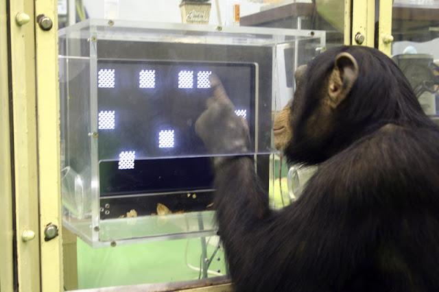 Maymun Zeka Testi