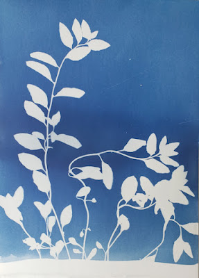 A cyanotype image of leaves and a blurb about cicadas
