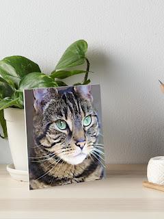 tabby cat art