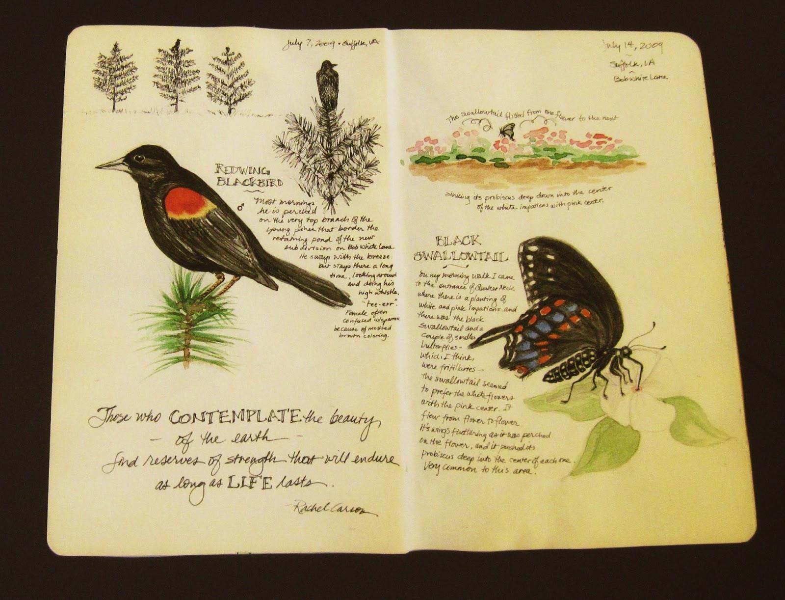 nature journals journaling journal botanical haaland drawing writing artists tn roseanna virginia redwing swallowtail library exploring enjoy garden roseanne central