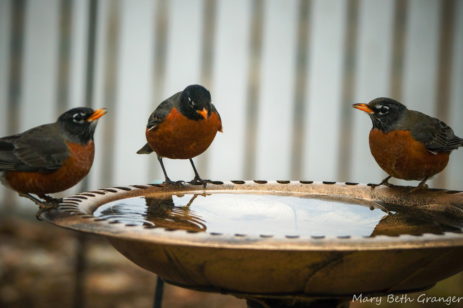 review of backyard birdbath