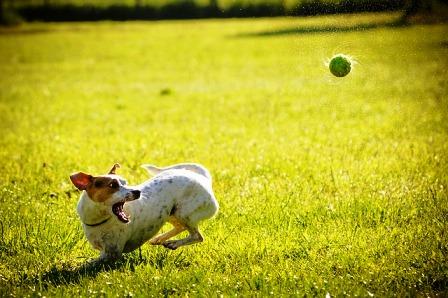 anjing dan bahaya rabies