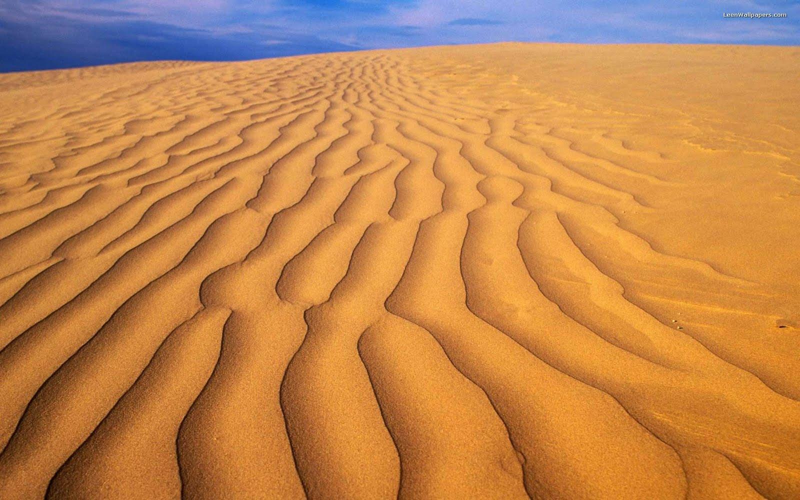 Kelsey Chen: desert wallpaper