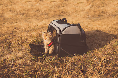 A small kitten is sitting in the opening of a carrier