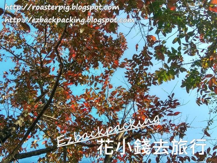 九龍公園紅葉2021