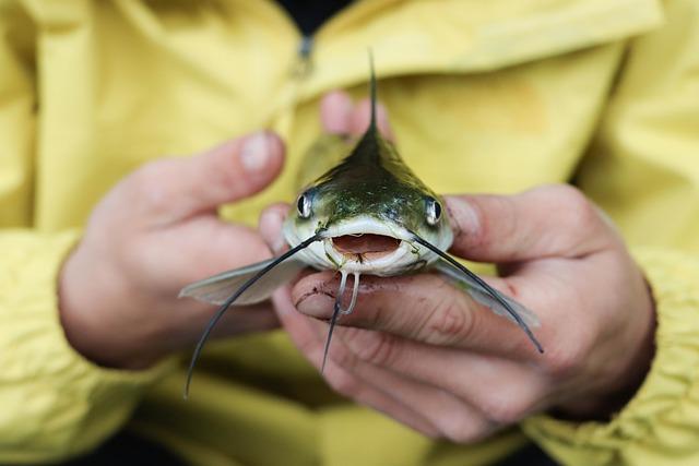 Ternyata Memelihara Ikan Lele Itu Menguntungkan!