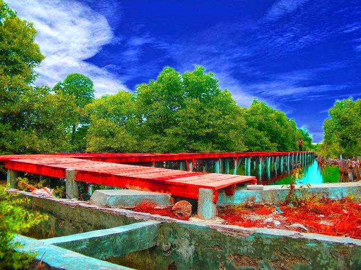 Hutan Bakau di Pulau Lancang Dilengkapi Jembatan ~ Pulau ...