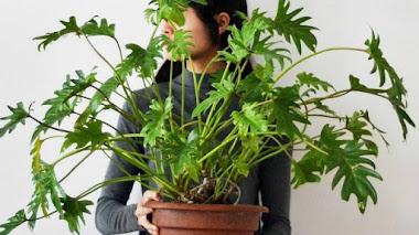 Una de Instagram. Plantas de interior con Studio Plants