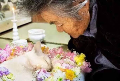 vita e morte di un gatto