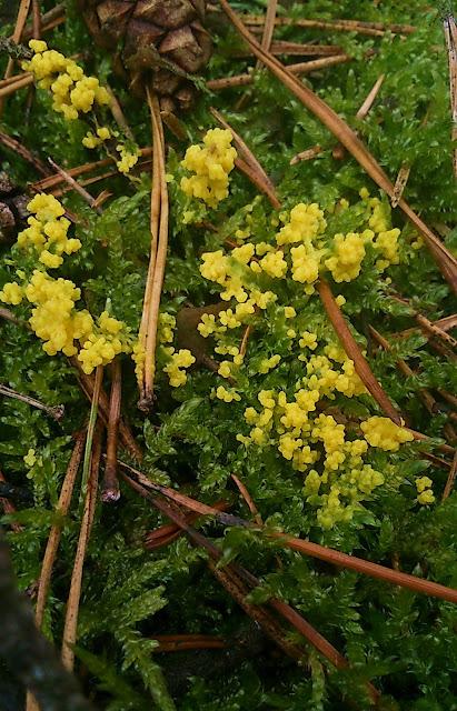 letnie kolory lasu