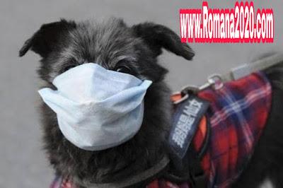 """منظمة الصحة العالمية تسجل أول إصابة بفيروس كورونا corona virus عند """"كلب"""""""