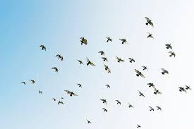 Hundreds of migratory birds take over interior of California home|interesting news|
