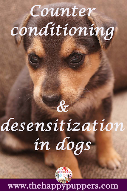How to counter condition your dog towards separation anxiety