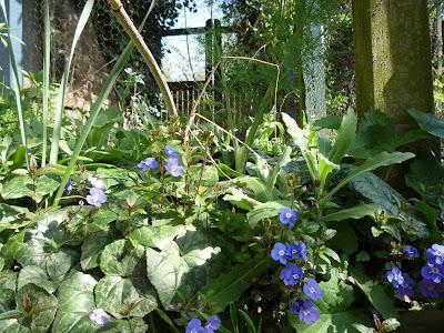 Forest garden flowers