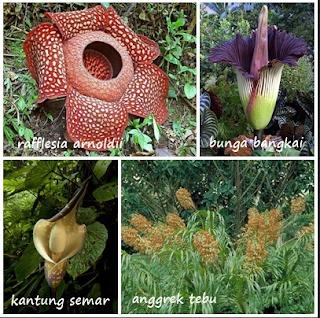 wisata taman nasional sumatra
