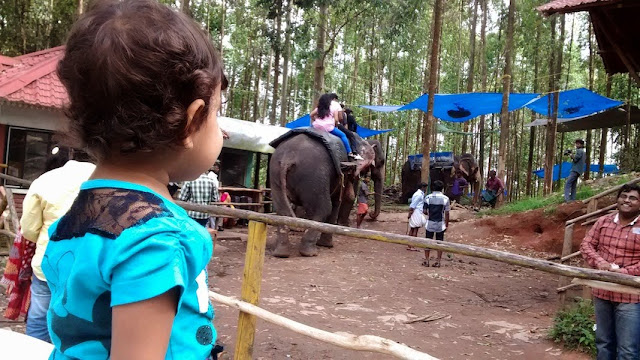 Things To Do In Kerala, My Travel Diary