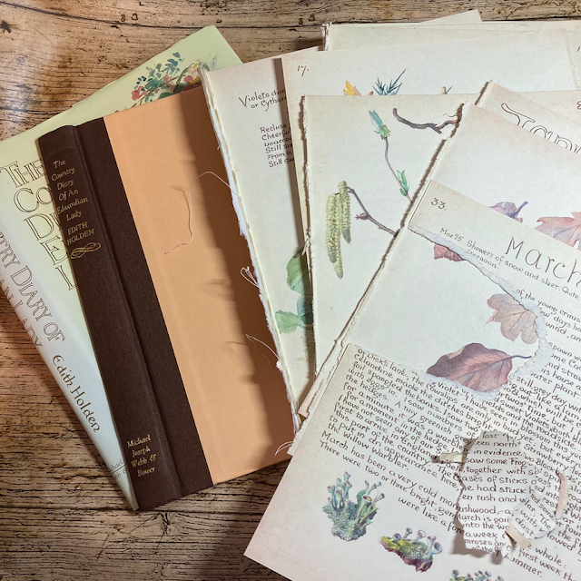 Junk Journalling With Edith Holden #1