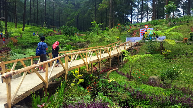 [CoC Regional: Lokasi Wisata] Melancong ke Hutan Pinus Limpakuwus