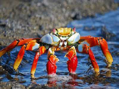 Water Animals Name Crab