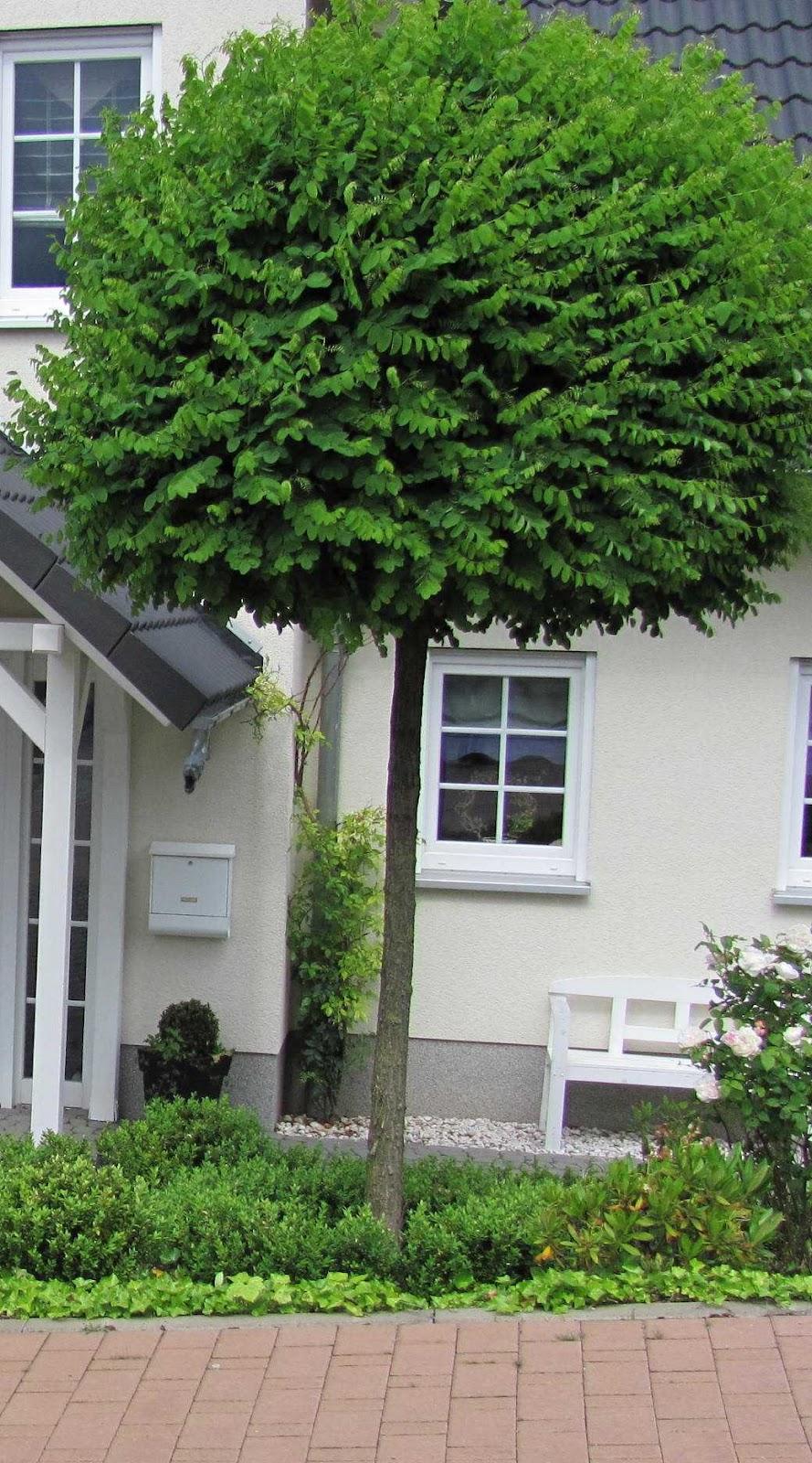 Kleine Laubbäume Für Den Garten Top 10 Der Beliebtesten Hecken