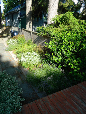 Oakwood Village Toronto backyard garden makeover before by Paul Jung Gardening Services