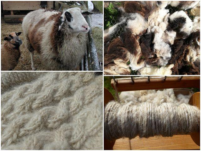 Projekt:  Decke aus Schafwolle II Teil 8 Wolle v. ostfriesischen Milchschaf