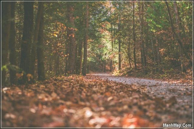 con đường tháng 9 lá rụng đầy