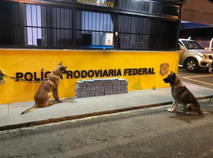 PRF apreende 68 quilos de cocaína com auxílio de cães farejadores na RMC; motorista se apresentou como advogado