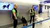 Perros detectores de Covid-19 controlarían regreso de público a los estadios