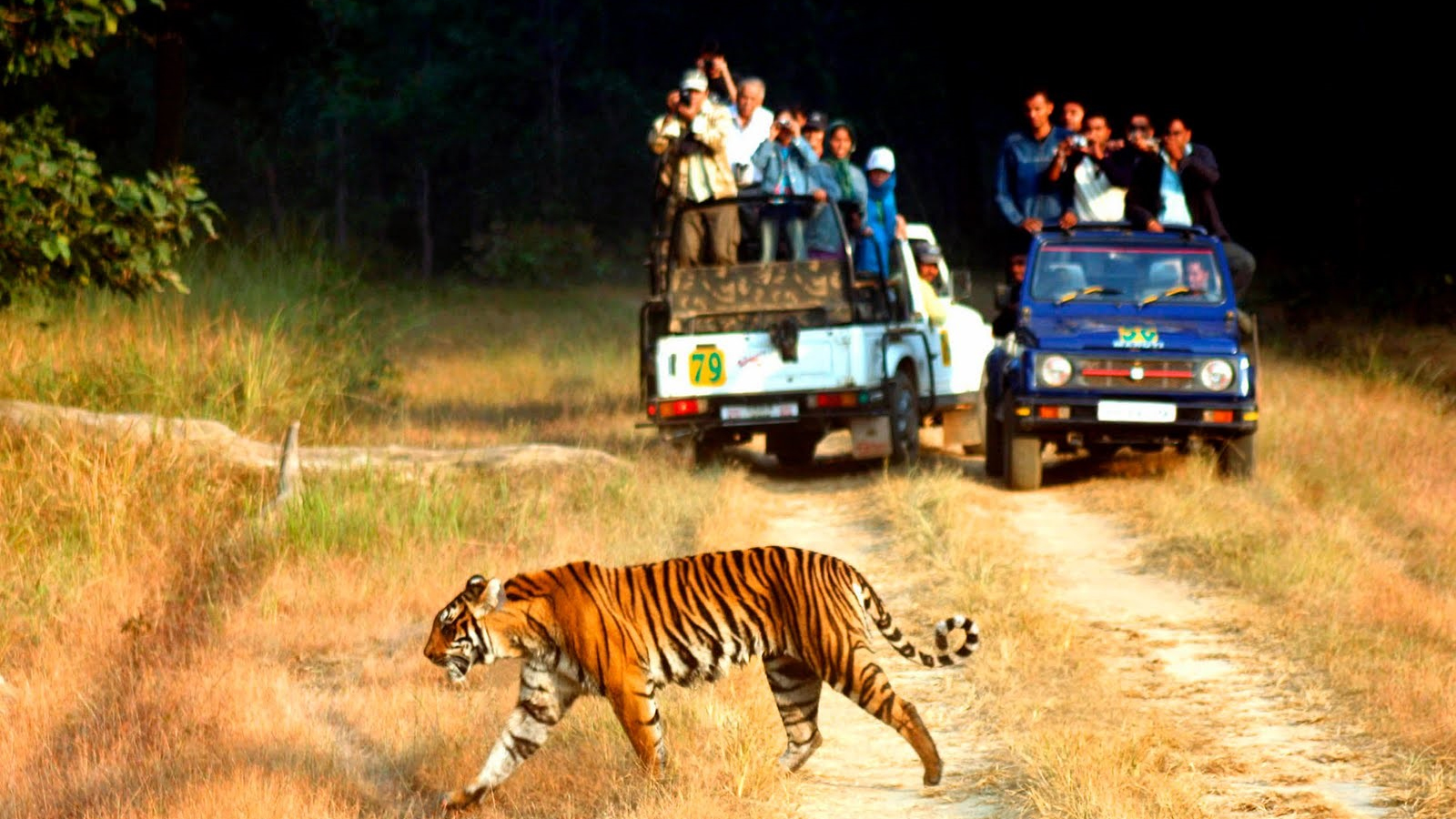 The Best of Indian Wildlife
