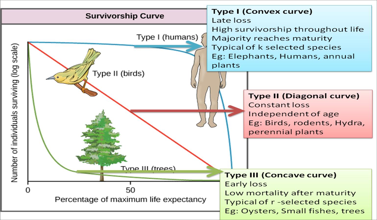 3 Types of survivorship curves