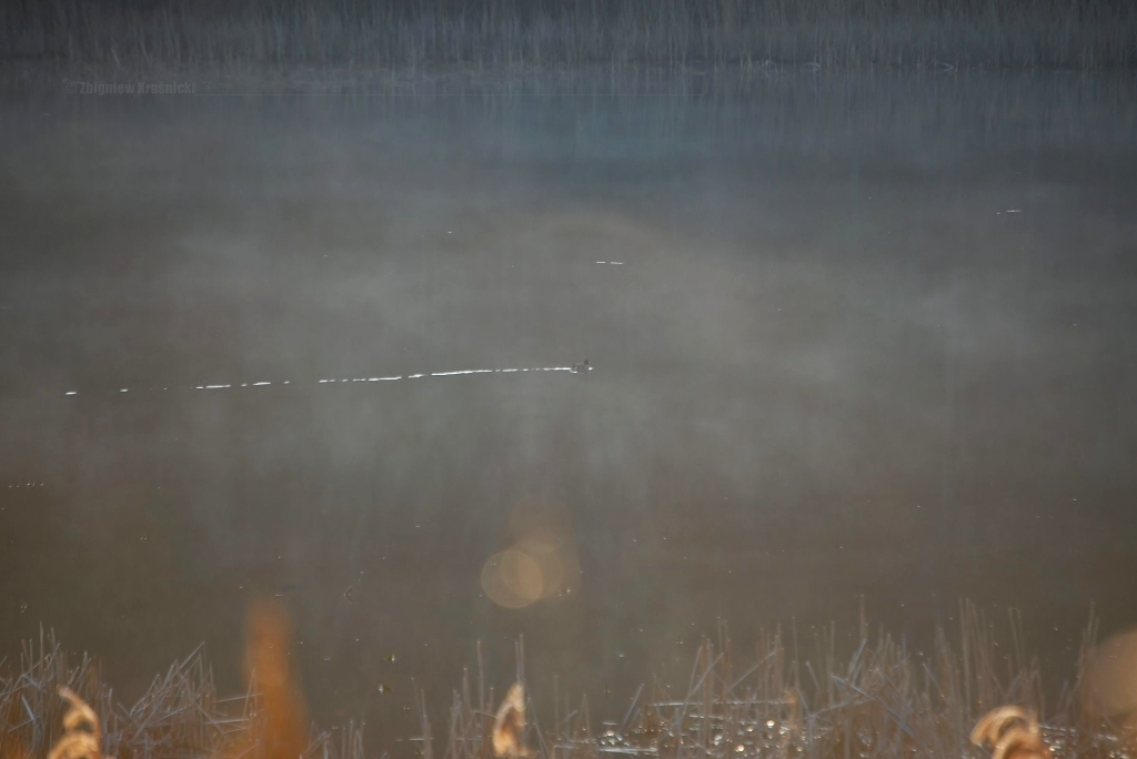 Jezioro Kielarskie w mroźny dzień