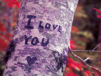i love you nice written on tree image