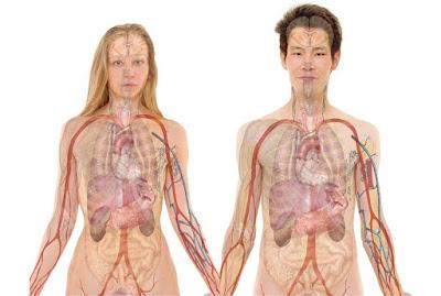 partes del cuerpo y sus conflictos en la bioneuroemocion