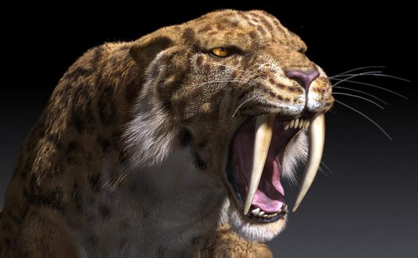 kucing besar prasejarah smilodon