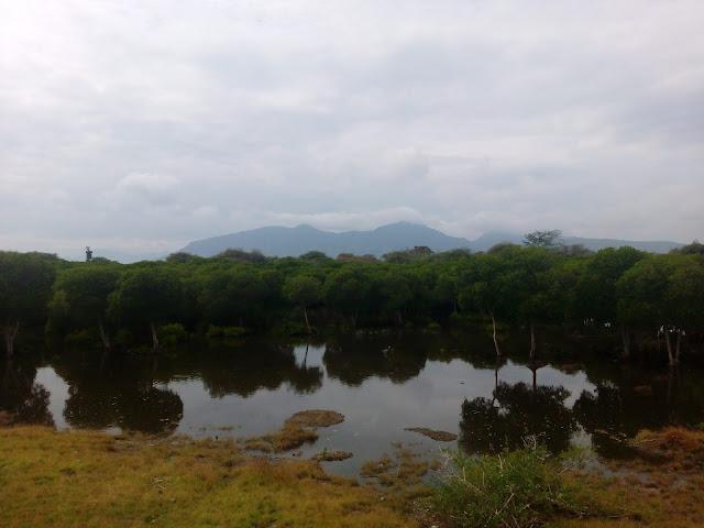 Pohon Bakau Wisata Karang Sewu