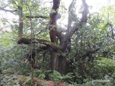 Inside Garbutt Wood, North Yorkshire
