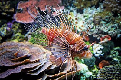 Ikan berbahaya