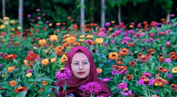 Spot foto hits alamanda flower garden
