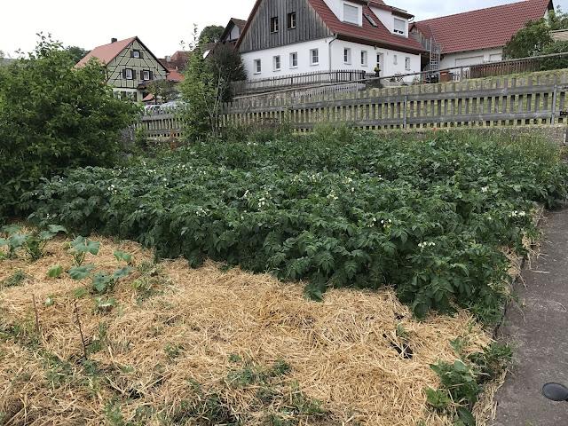 Kartoffelbeete (c) by Joachim Wenk