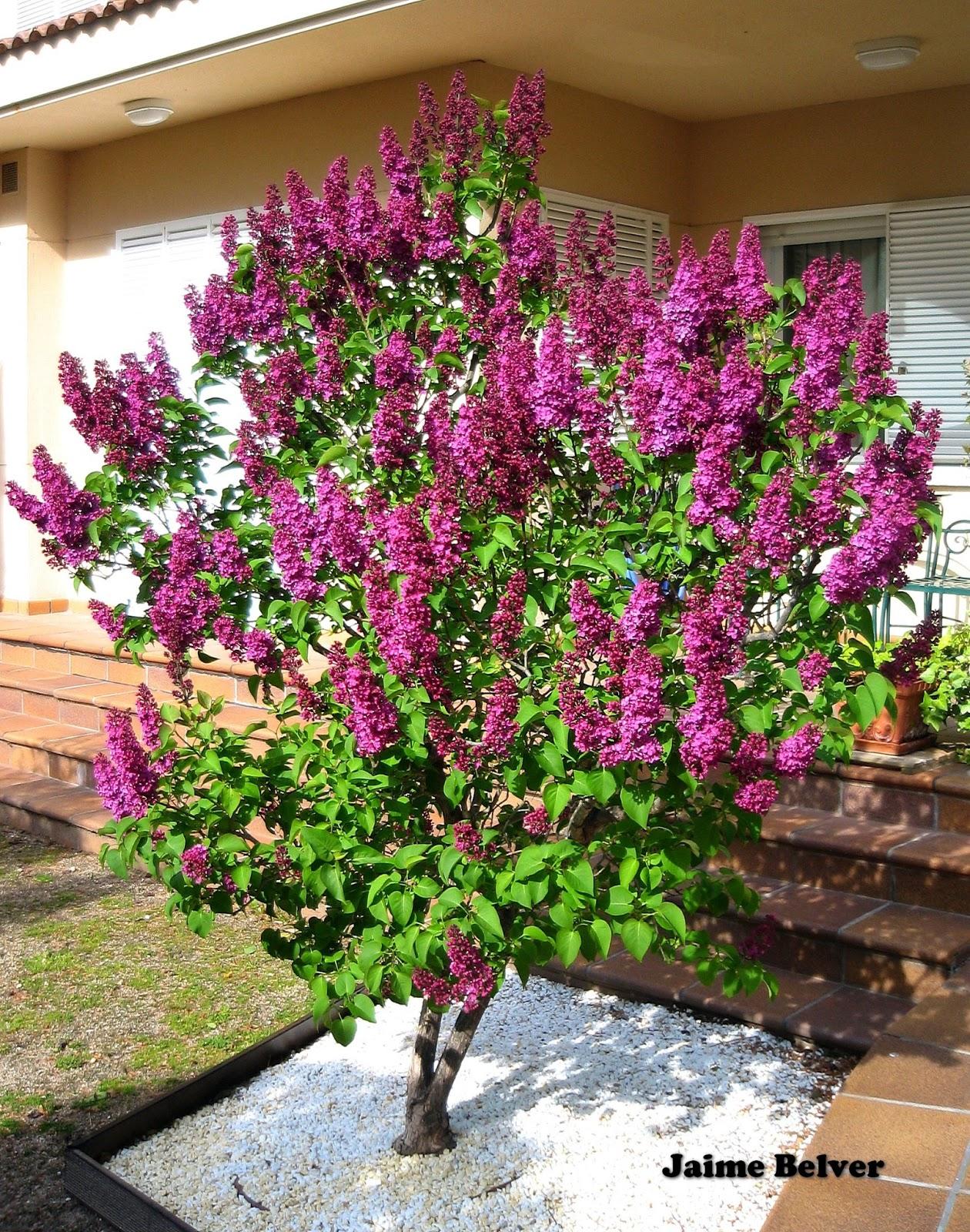 Jardinería, un arte para todos: abril 2013