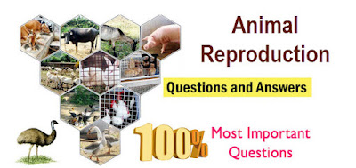 Animal Reproduction Question and answer part III