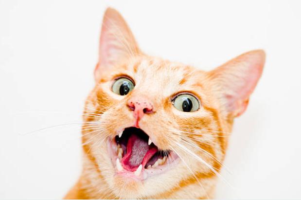 gato-engraçado-galeria-animal-vetarq