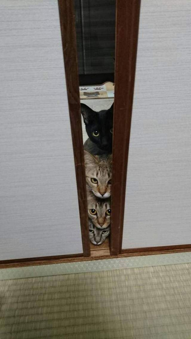 Funny cats - part 314, cute cat photo, cat picture