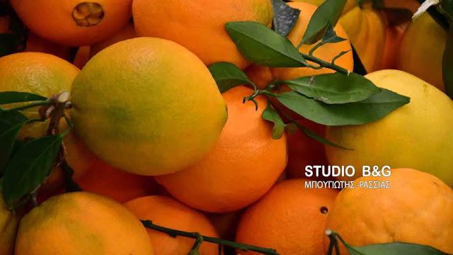 Αργολίδα: Κύριο πρόβλημα για το πορτοκάλι ο μικρός όγκος εξαγωγών