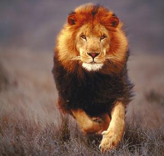 एक शिक्षाप्रद कहानी - शेर और गीदड़ की शर्त