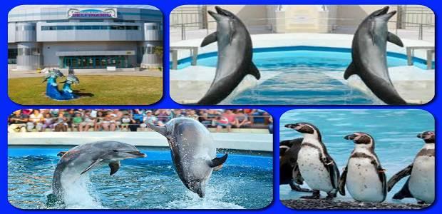 Delfini si pinguini la Delfinariul Constanta.