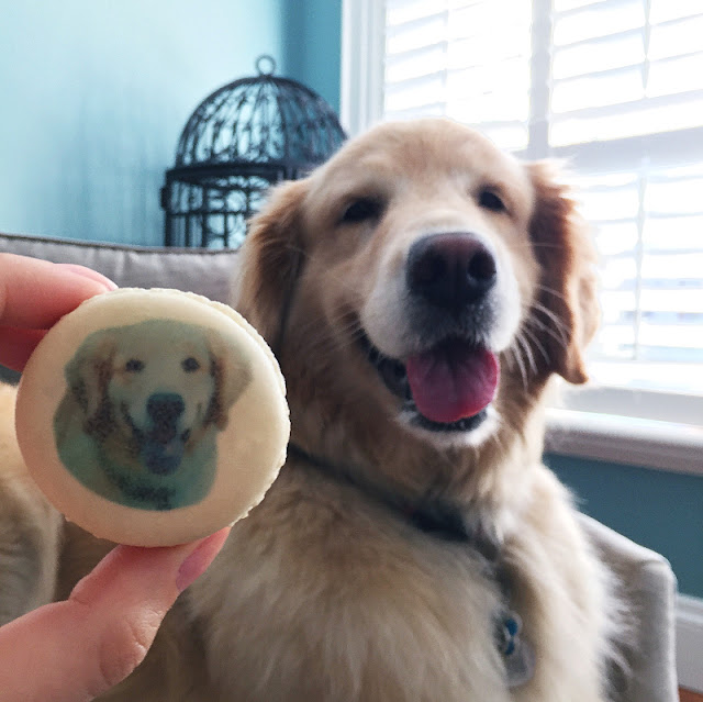 national dog day Nadege patisserie golden retriever macrons